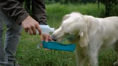 домашнее животное : Gollden retriever dog drinking water from a drinker Стоковые видеозаписи