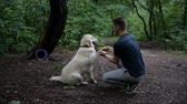 4k Slow motion. Man and Golden retriever dog outdoor in the park.