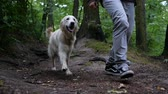 společník : 4k Slow motion. Man and Golden retriever dog outdoor in the park.