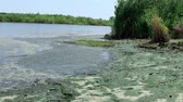 toksik : Ecology. Environmental pollution on the beach. Rivers turn into a swamp. Stok Video