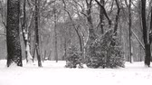 de faia : Snow falls at a slowed pace. Winter city park. Snow blizzard, snow-covered trees. Winter cold snow cyclone.
