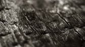 burned wood macro structure, sliding camera movement