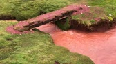 ponte : red water stream flowing through green moss land in Peruvian mountains