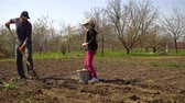 tubero : man and girl planting potatoes on farmers field in early spring Filmati Stock