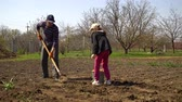 tubero : farmer and daughter planting potatoes on field in early spring Filmati Stock