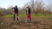 spades : farmer and his little daughter working in field planting potatoes in spring