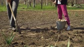 tubero : low shot of farmer and his daughter working on field and planting potatoes