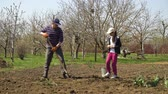 tubero : caucasian farmer and his daughter planting potatoes on farm in early spring