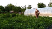 exterminateur : farmer wearing protective clothes and mask sprays chemicals on potato sprouts