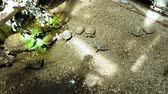 creep : top down shot of tortoises of different size crawling slowly in terrarium Stock Footage