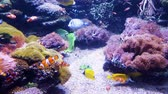 fins : clown fish and other exotic fish swim in aquarium with sea plants on background