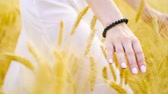 kontakty : Girls hand touching golden wheat ears in field
