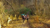 Hikers on expedition in beautiful autumn forest Stock Footage