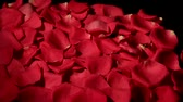 smell : Wind blows red rose petals from a black background.