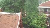 condensação : Strong tropical downpour in the Thailand stock footage video