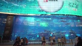 grouper : Dubai, UAE - April 09, 2018: Dubai Aquarium and Under Water Zoo in the shopping malls interior Dubai Mall. People enjoying the beautiful view stock footage video