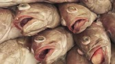 fish and chips : Fresh frozen fish on the counter in the supermarket stock footage video