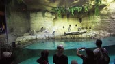 humorous : Dubai, UAE - April 09, 2018: People are watching the penguins in the Underwater Zoo in Dubai Mall stock footage video