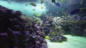 feeding fish aquarium : Beautiful marine aquarium with colorful fish stock footage video