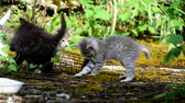 nascido : Little cats playing