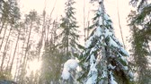 harvesting work in the forest in winter