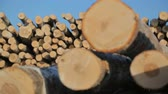 lumbering : warehousing of logs on logging Stock Footage