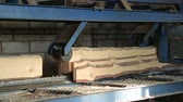 feeding and sawing logs at the sawmill Stock Footage