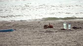 dogs playing on the beach Stock Footage
