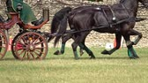 žokej : Two horses carriage contest. Slow motion