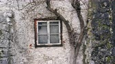 vila : The window of an old house near which grows dry up the tree. Old curtains on the window. Dostupné videozáznamy