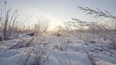 zúzmara : Winter background, dry grass snowflakes
