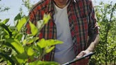 propagação : Farmer checking a fruit tree in an orchard then writing notes on a clipboard in a close up view through leaves. Vídeos