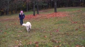 pet friend : happy little girl of european appearance is having fun playing in the autumn park with a big beautiful dog - slow motion Stock Footage