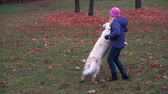 happy little girl of european appearance is having fun playing in the autumn park with a big beautiful dog - slow motion Dostupné videozáznamy