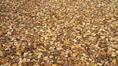 Autumn leaves falling on the ground in the city park
