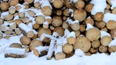 сугроб : Snow falling beautifully on background of wooden pine or fir logs