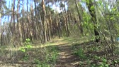 bike ride : Riding a mountain bike in a forest in spring. Shot on action camera. Stock Footage
