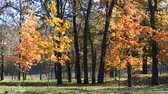 проливая : Scenic leaf fall in autumn park or forest with leaves falling on the ground with green grass blown by wind. Beautiful background