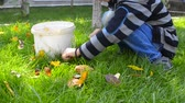 lifestyle : Family kid collecting, picking leaves in garden - Stock Video. Low angle view of child collecting autumn fallen leafs on green grass garden. Boy hand load colorful tree leaf in bucket. autumn works in garden.