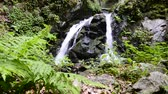 america : Cloudforest waterfall deep in the untouched nature forest with a ecological clean water