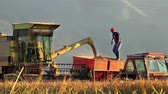 machinery : harvested corn, rice is being transferred to a tractor