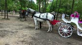 intramuros : Old-fashioned Coach At Sunny Beach park Stock Footage