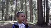 slomo : Hungry boy Eating eagerly a patato chips at picnic in forest, SLOW MOTION