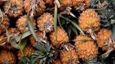 food : Pineapple or Ripe pineapple, Pile of Organic Pineapple at the market