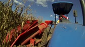 pelúcia : Harvesting the corn field with small tractor
