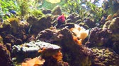 aquarium : Tropical fish in an aquarium
