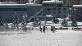 trotting : The horserace Grand Prix on the White Turf in the magnificent scenery of the Upper Engadine on February 23rd, 2014 in St. Moritz Switzerland Stock Footage