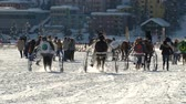 trotting : trotters and horses in slow motion after White Turf Grand Prix on February 23rd, 2014 in St. Moritz Switzerland