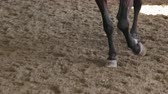 trotting : Closeup of the hooves of a galloping horse on a sandy track