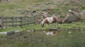 livre : A brown and white pony breading near a mountain lake